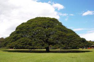 の この 木 木 なん